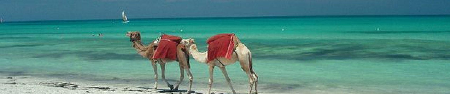 0_Djerba-beach-camels-Tunisia-Creative-Commons-Djerba-Travel