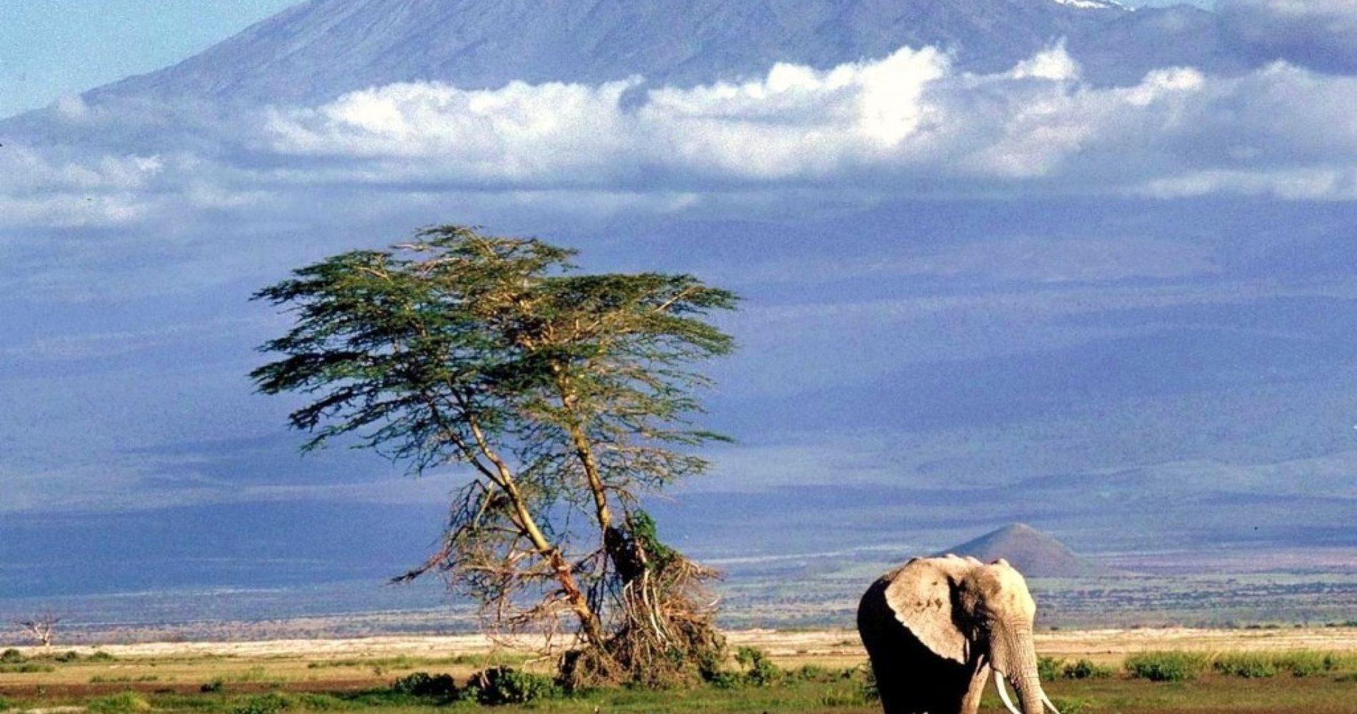 Tanzania_Safari_Of_Tanzania-FILEminimizer