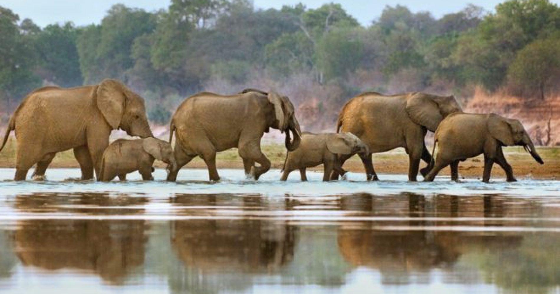 elefanti_selous
