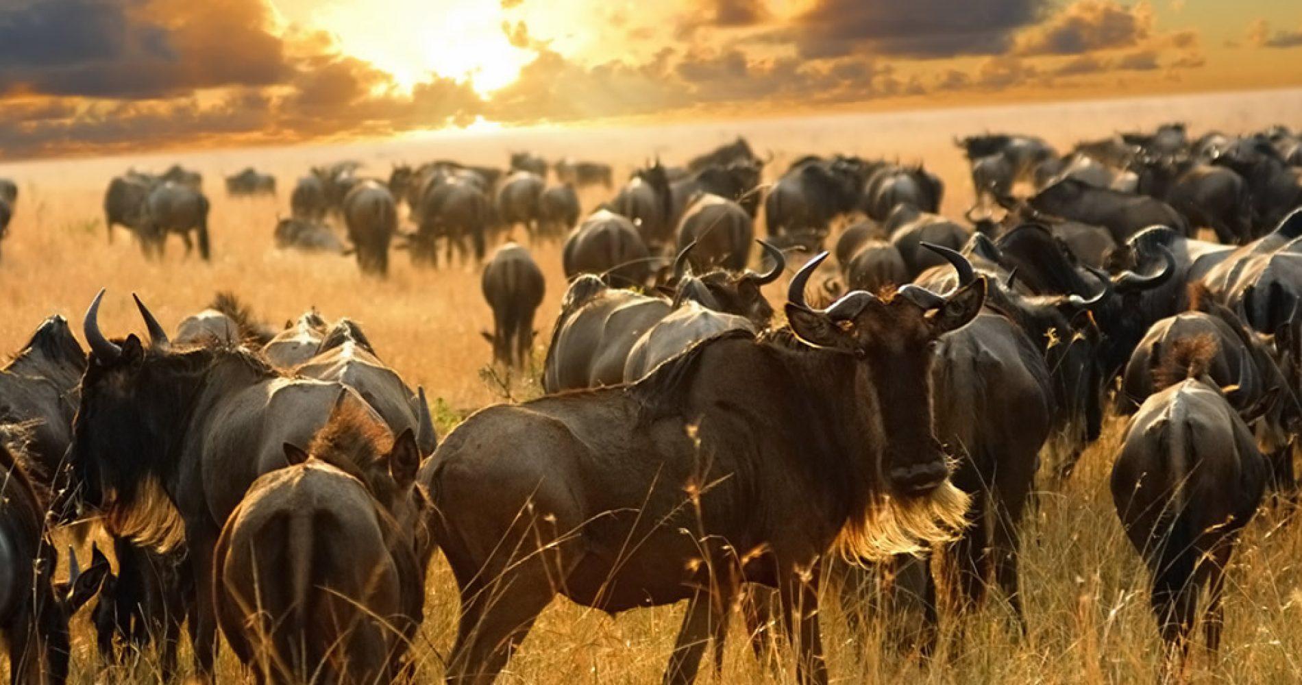 grande-migrazione-tanzania
