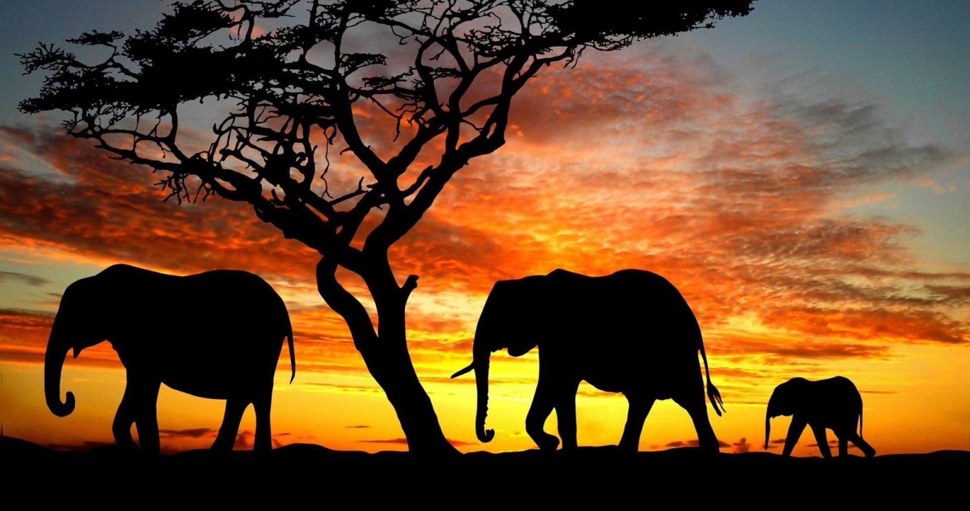 silhouette-di-elefanti-siluetta-dalbero-tramonto-nella-savana-192041