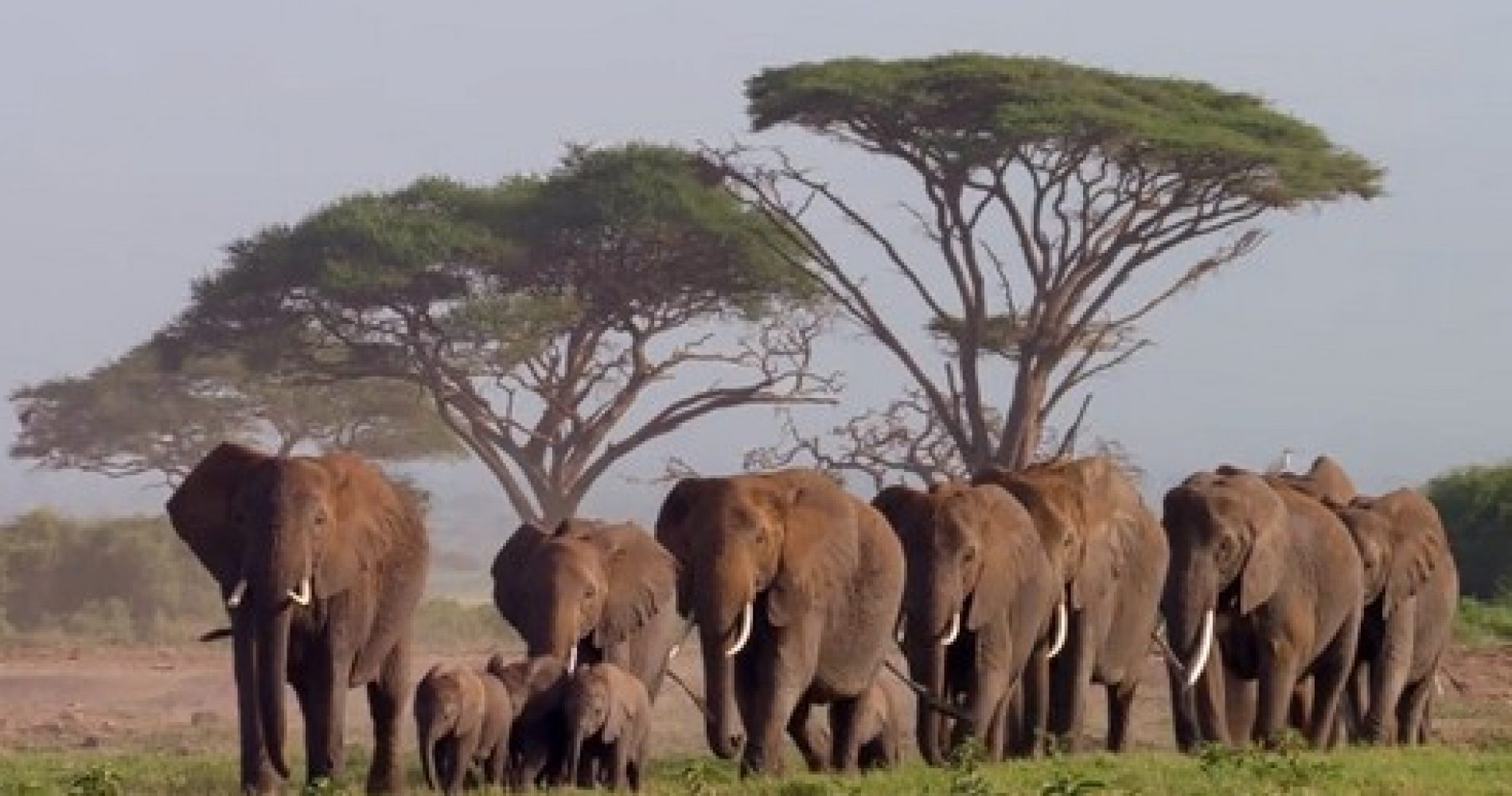 video-elefanti1